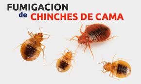 Fumigación, Control Plagas, Insectos de Casas en Lima, la molina, san borja, surco, miraflores, callao